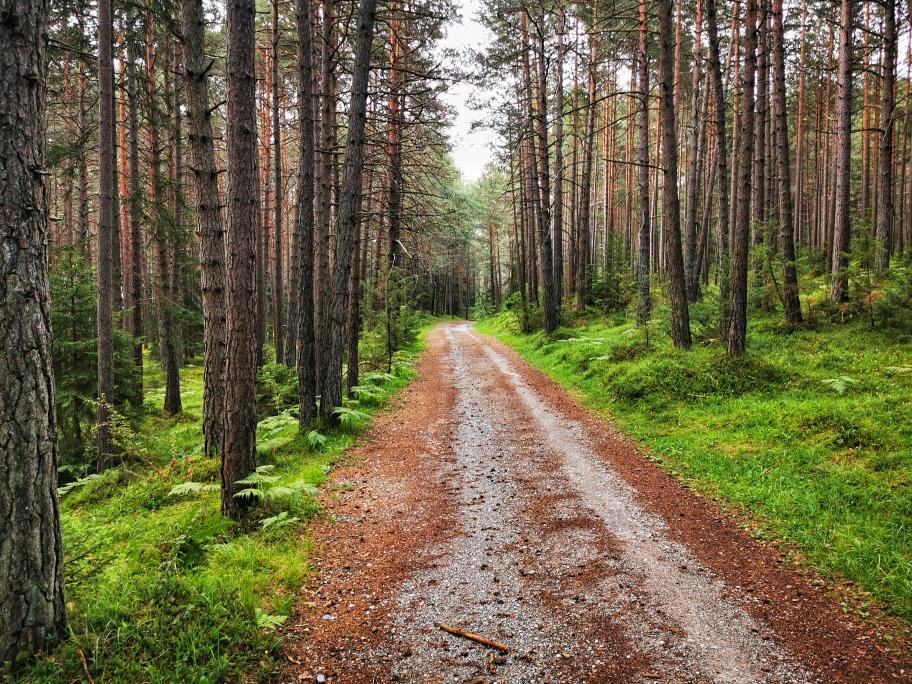 Breiter Fahrweg nach Mötz