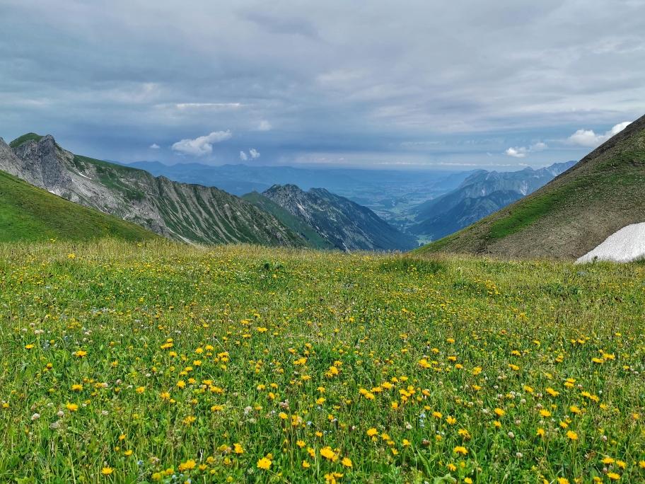 Blühende Wiesen, im Hintergrund Oberstdorf