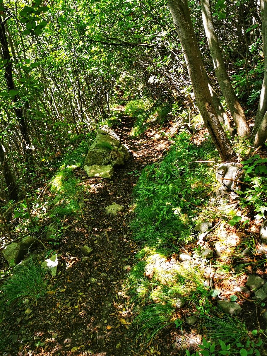 Im unteren Teil geht's zwischenzeitlich wieder durch den Wald