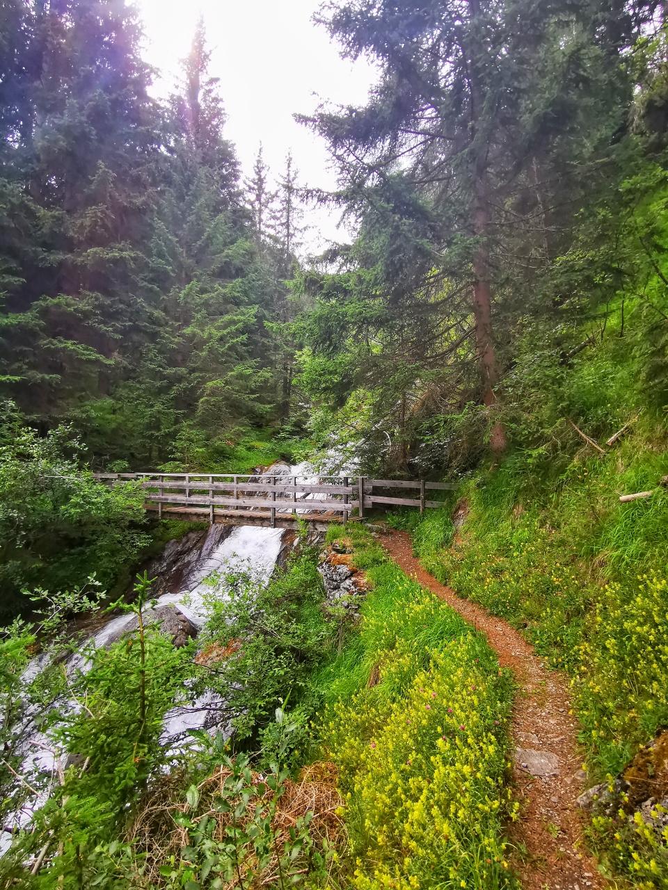 Auf schönen Wegen geht's im Wald bergan