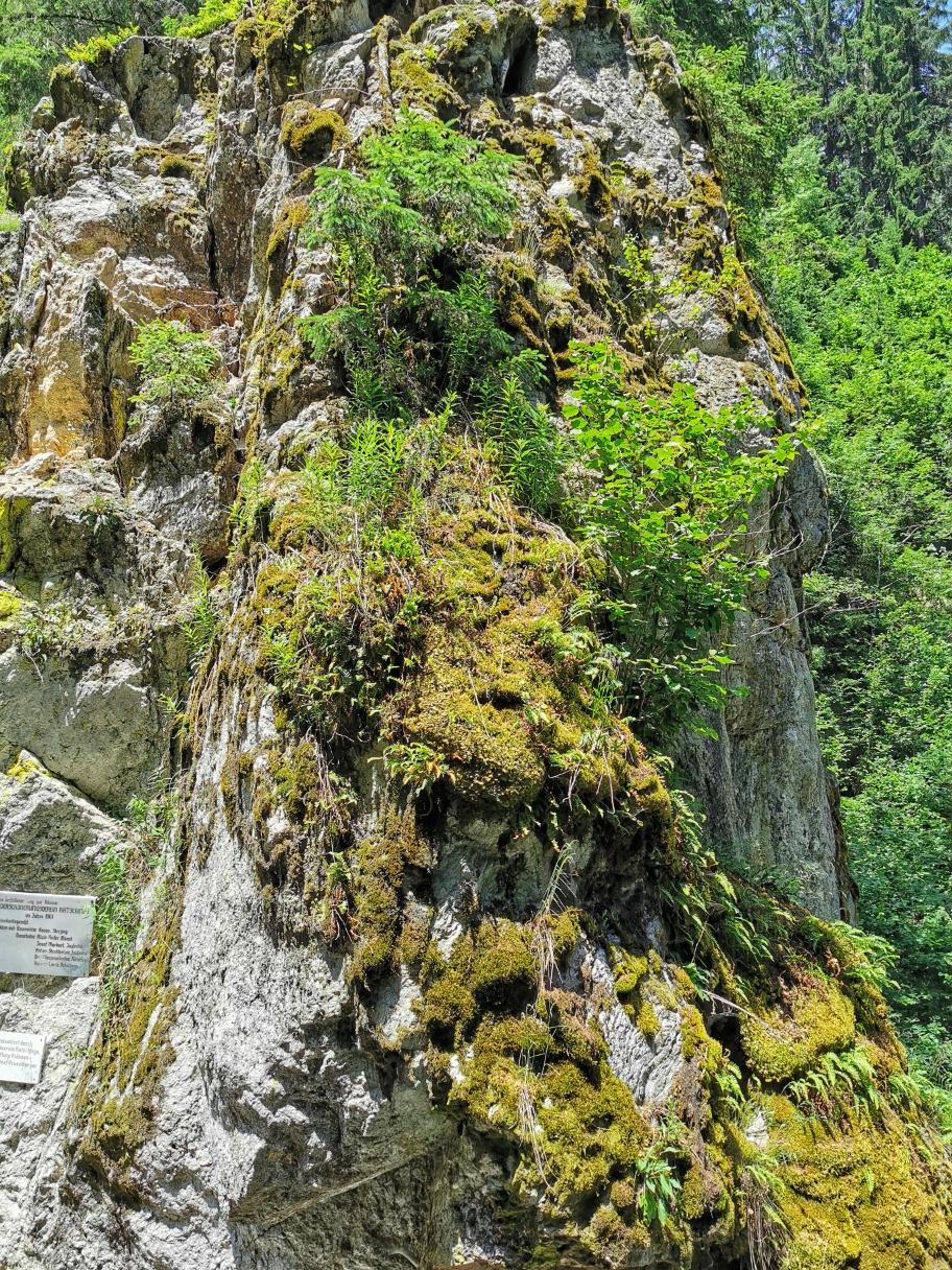 Wild bewachsene Felsen in der Klamm