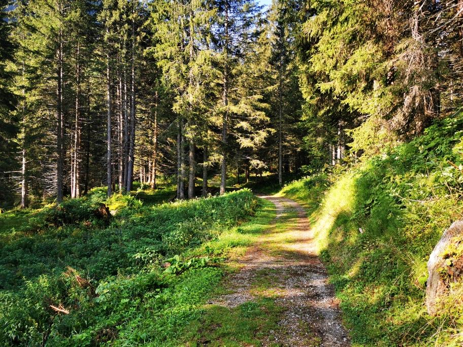 Im Wald ist es wesentlich angenehmer zu laufen