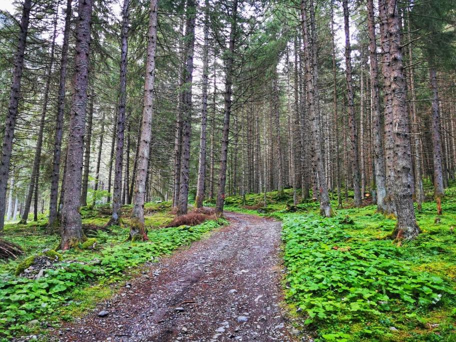 Gemütlicher Aufstieg im Wald