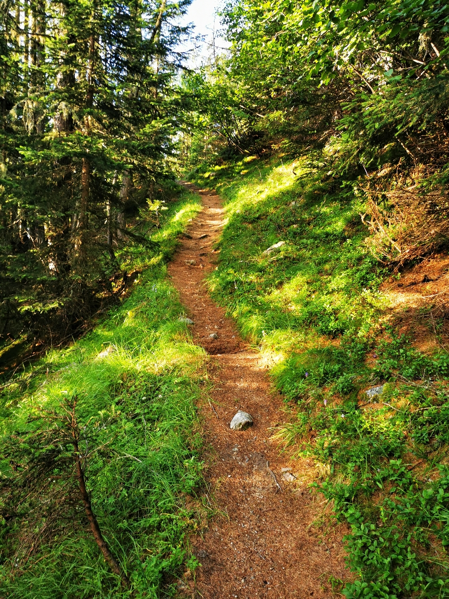 Im Wald geht's zunächst leicht bergan...