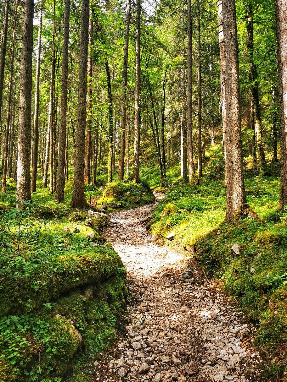 Auf schönen Waldwegen geht's immer tiefer hinein ins Tal