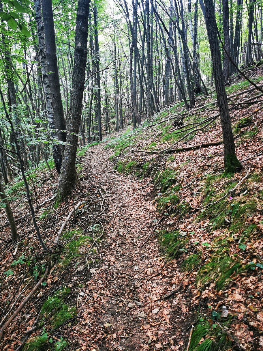 Lange geht es durch den Wald...