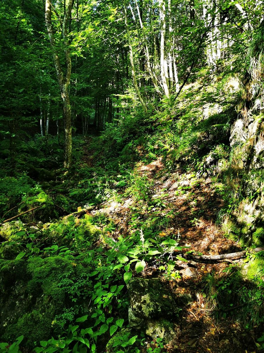 ... dann wieder im dichteren Wald...