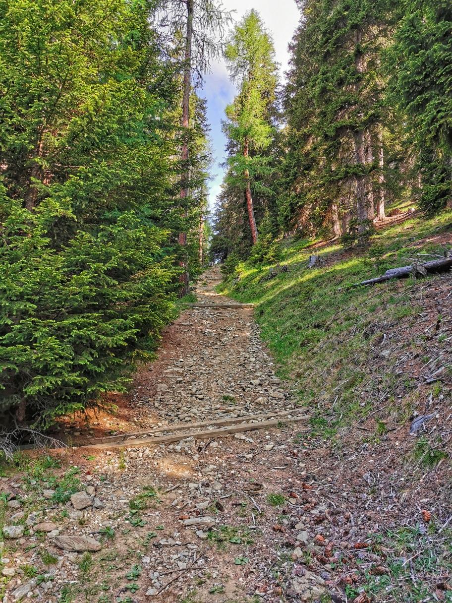 Der Weg führt teilweise steil durch den Wald