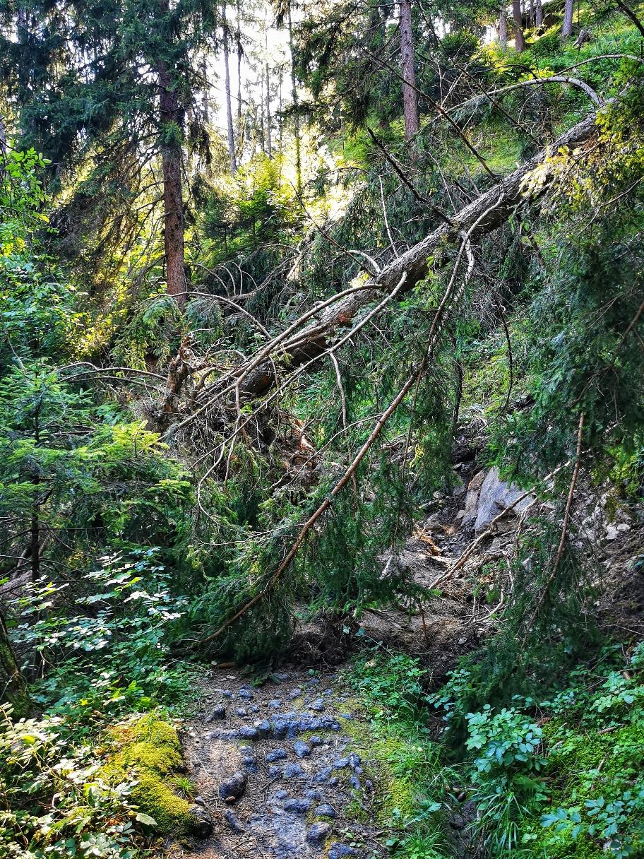 Ein Unwetter hat hier etliche Bäume entwurzelt