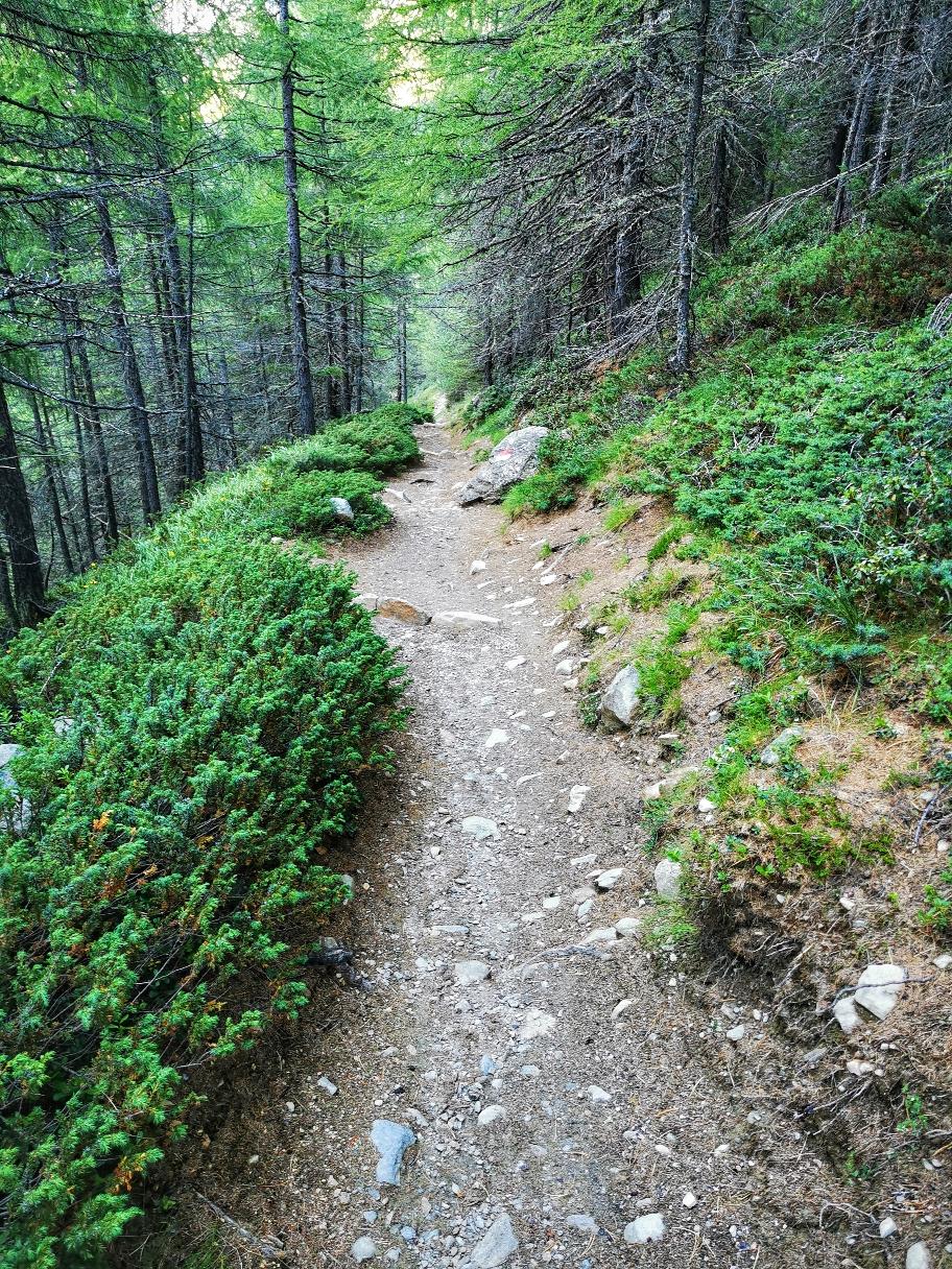 Auf schönen Waldwegen geht's ins Tal