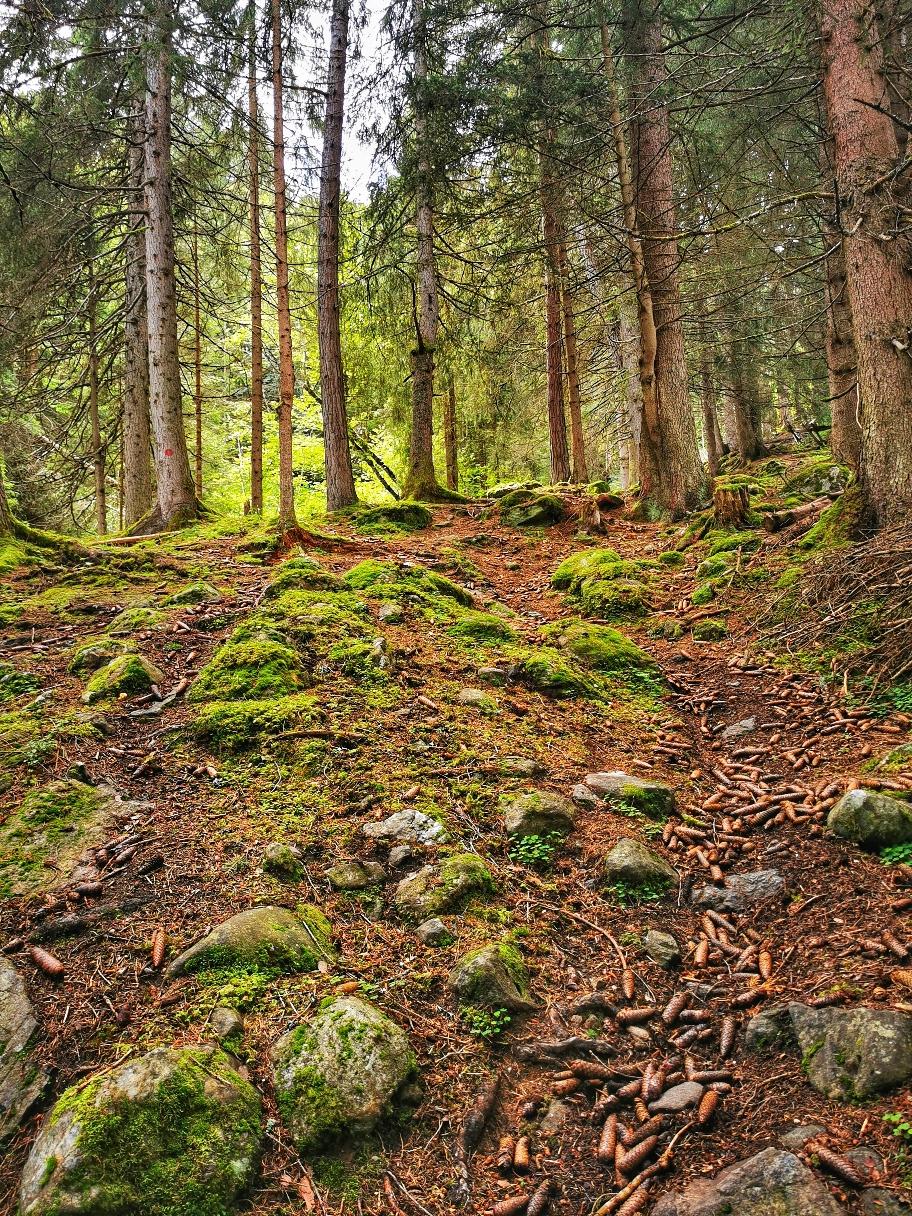 Weglos geht es durch den Wald