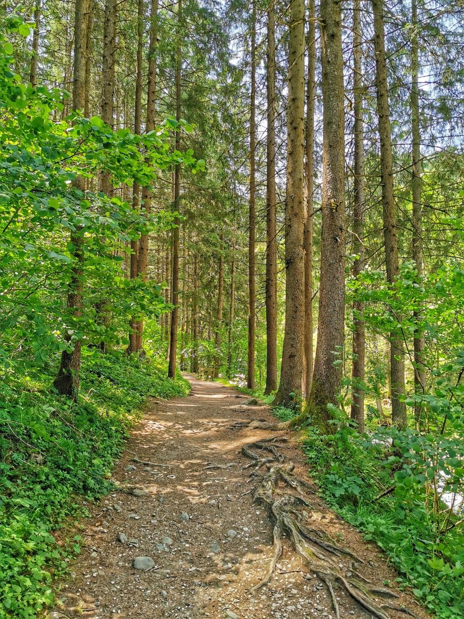 Auf gemütlichen Waldweg geht's Richtung Klamm