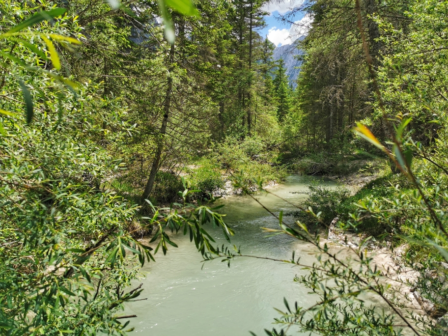 Wilder Wald am Ende des Sees