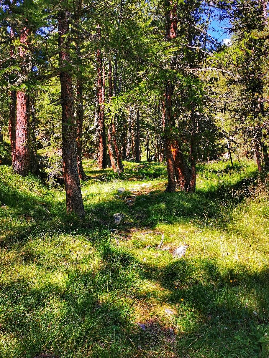Ein Stück geht's durch den Wald...