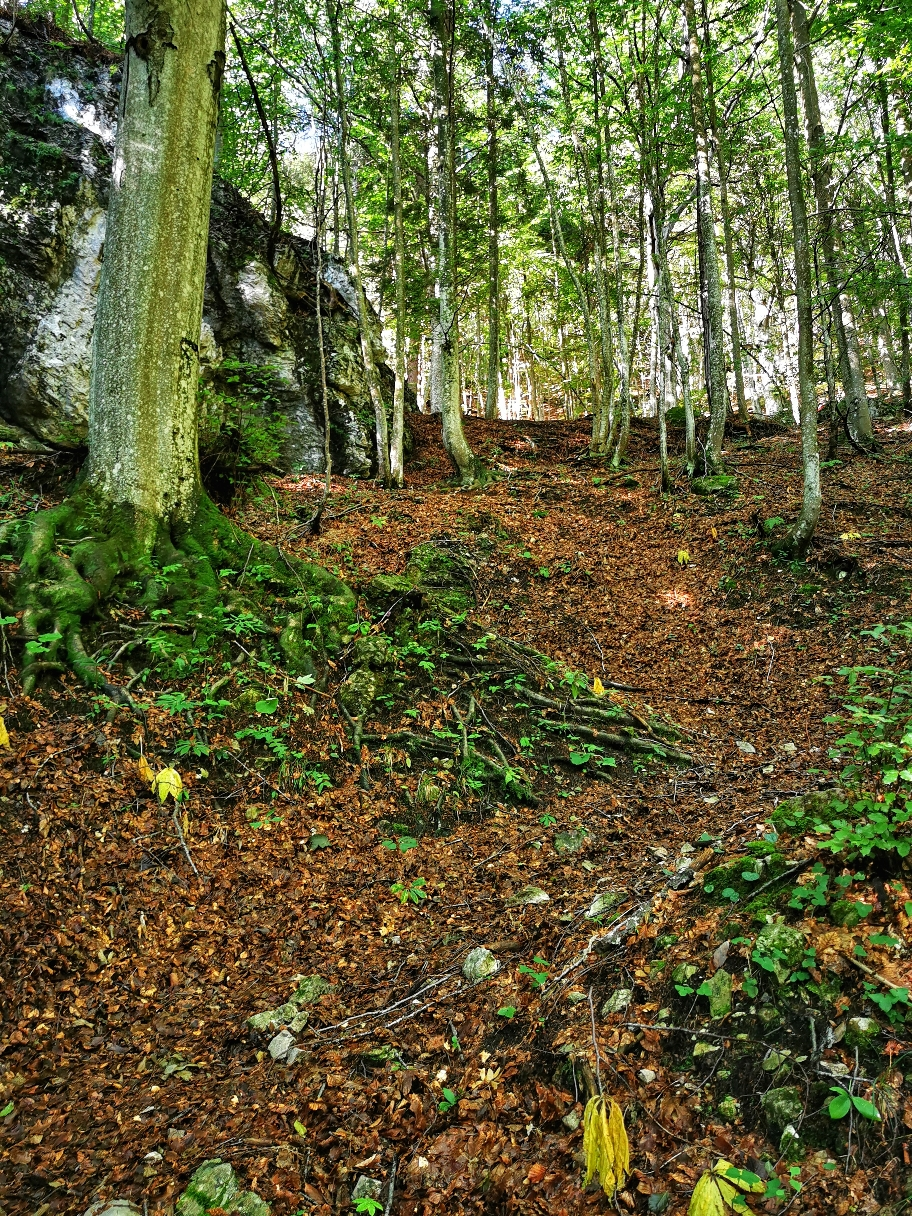 ... kein Ende des Waldes in Sicht