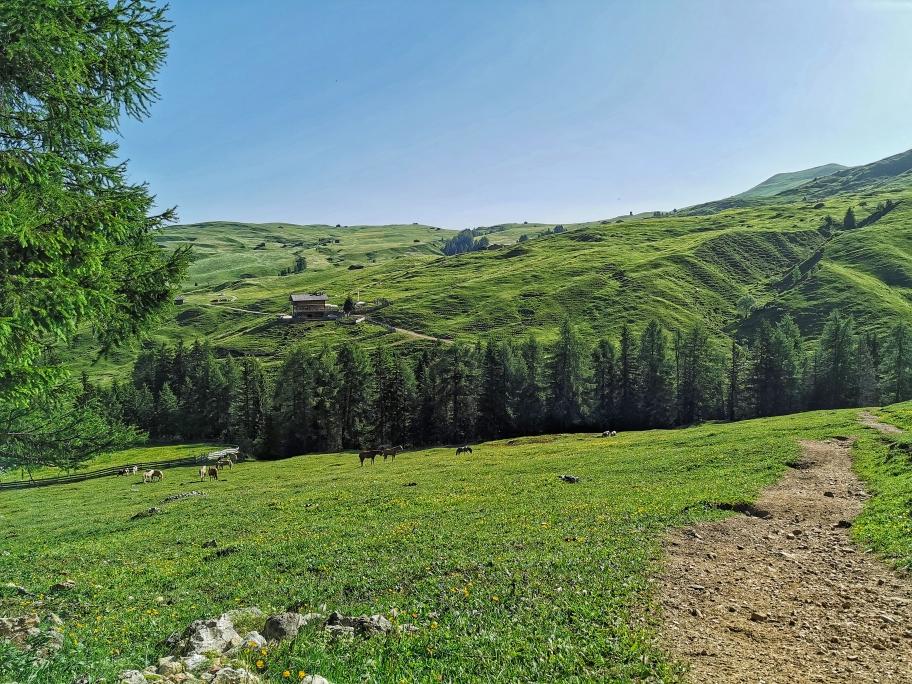 Ein Blick zurück auf die grünen Wiesen, die wir gleich gegen Felsen und Geröll eintauschen