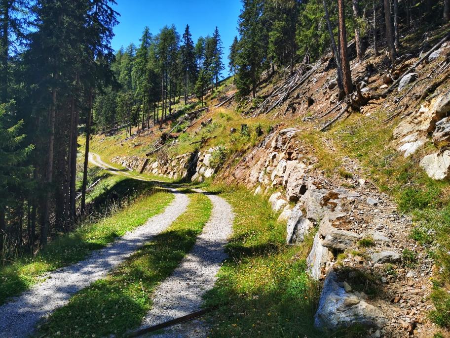 Links Fahrweg oder rechts Waldweg 🤔