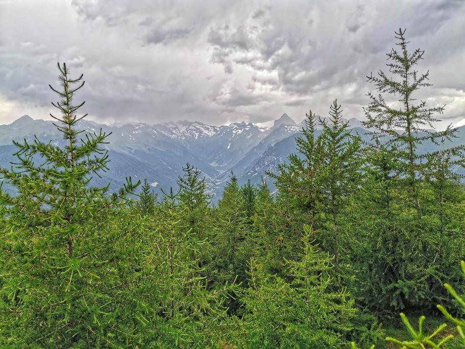 Schöner Zirbenwald beim Abstieg