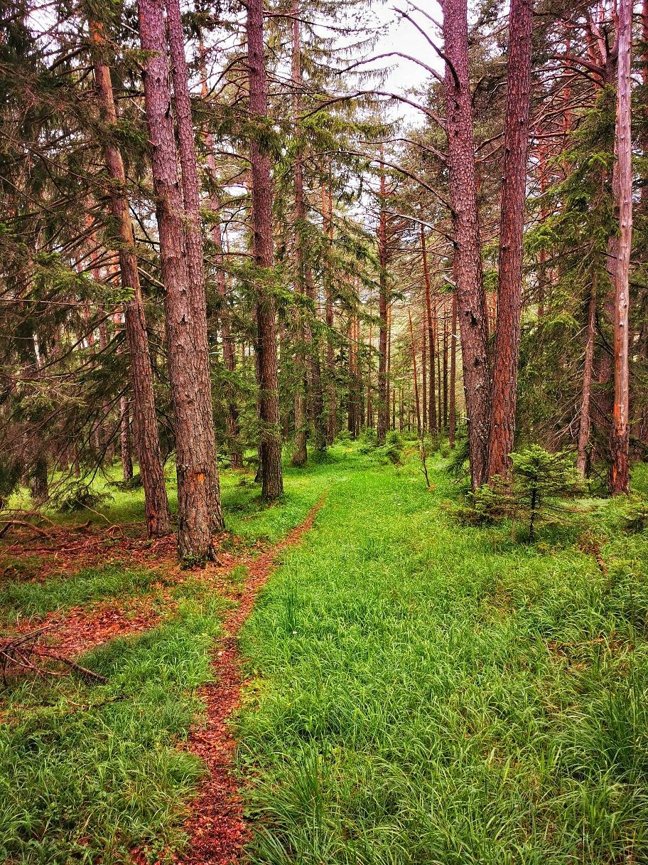 Schöner Waldweg kurz vor Obsteig