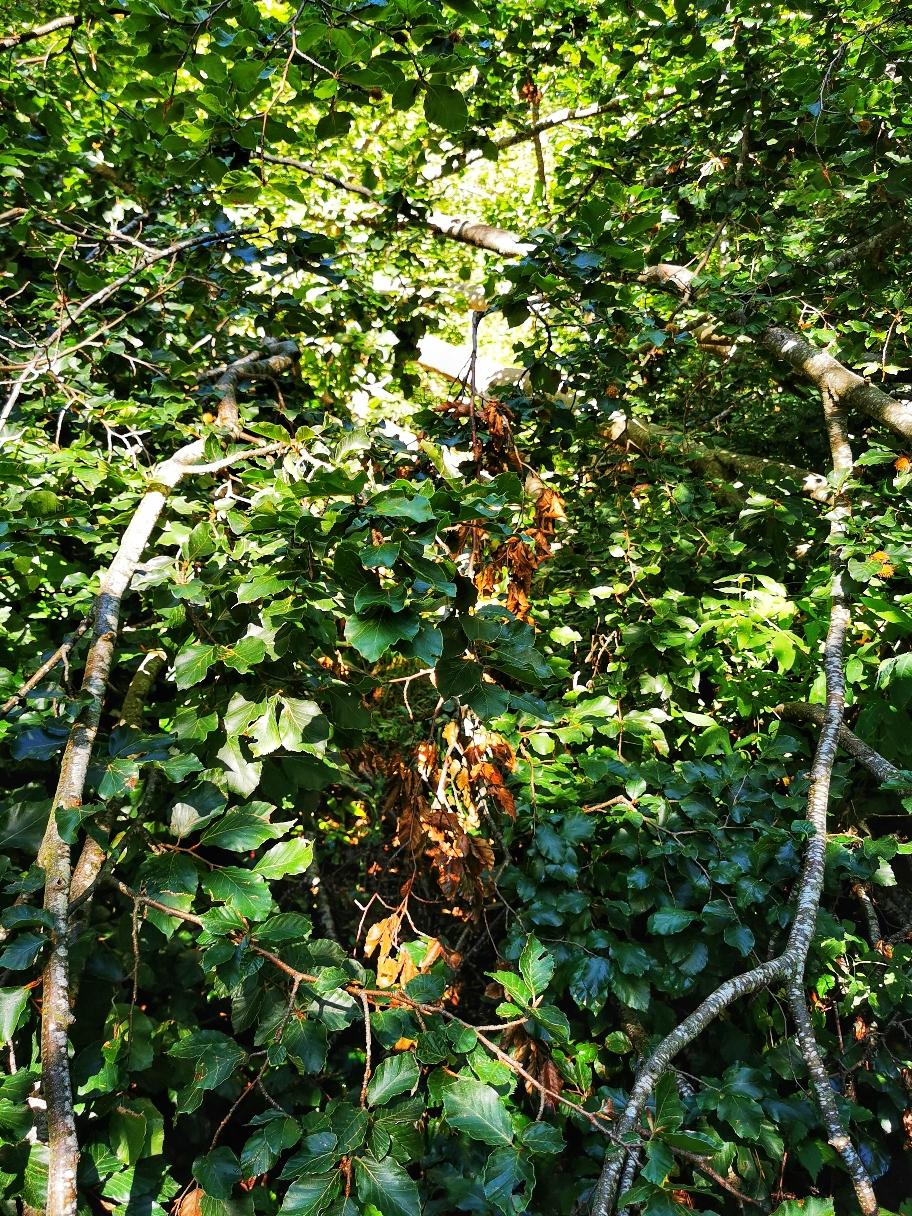 ... bahne ich mir den Weg durch den Wald