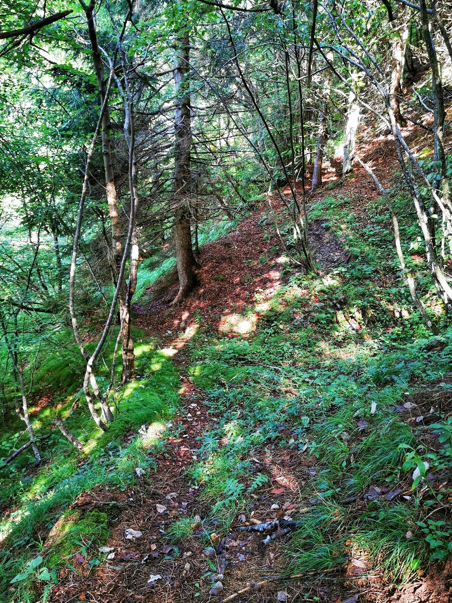 """Der """"Weg"""" im Wald ist kaum zu erkennen"""