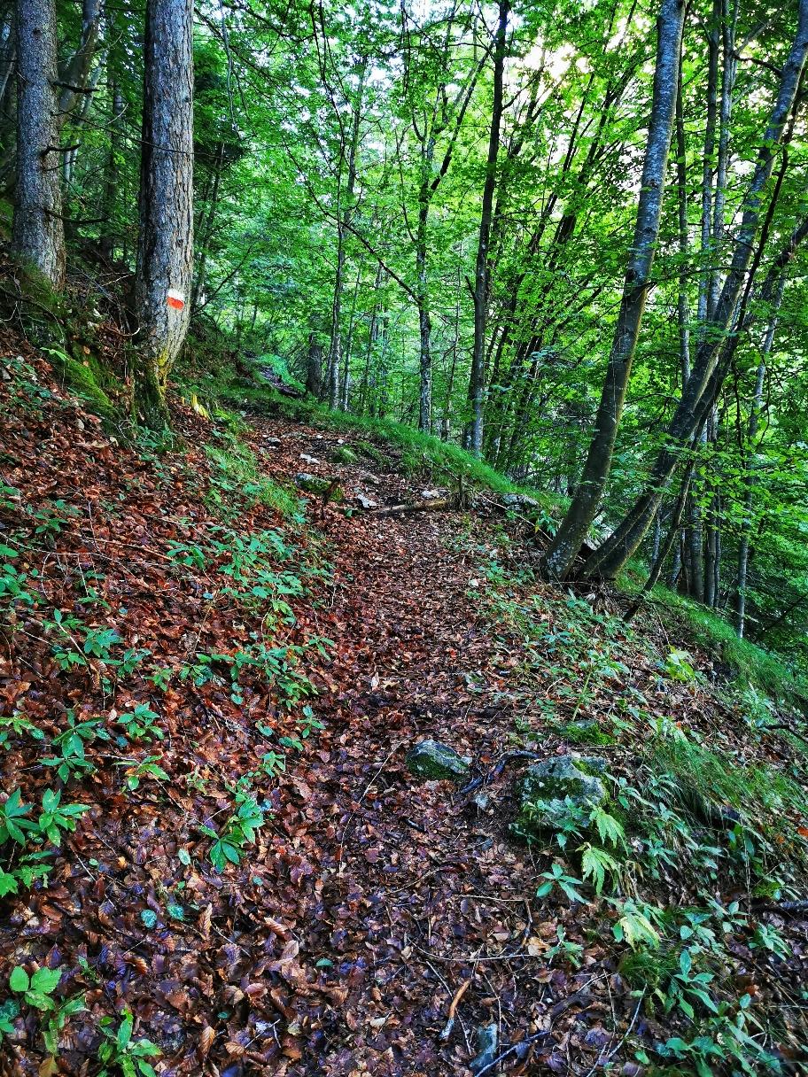Teilweise geht's in Kehren im Wald hinauf