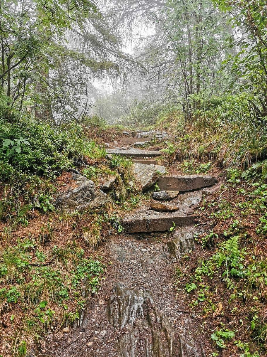 Durch den Wald steigen wir weiter hinauf