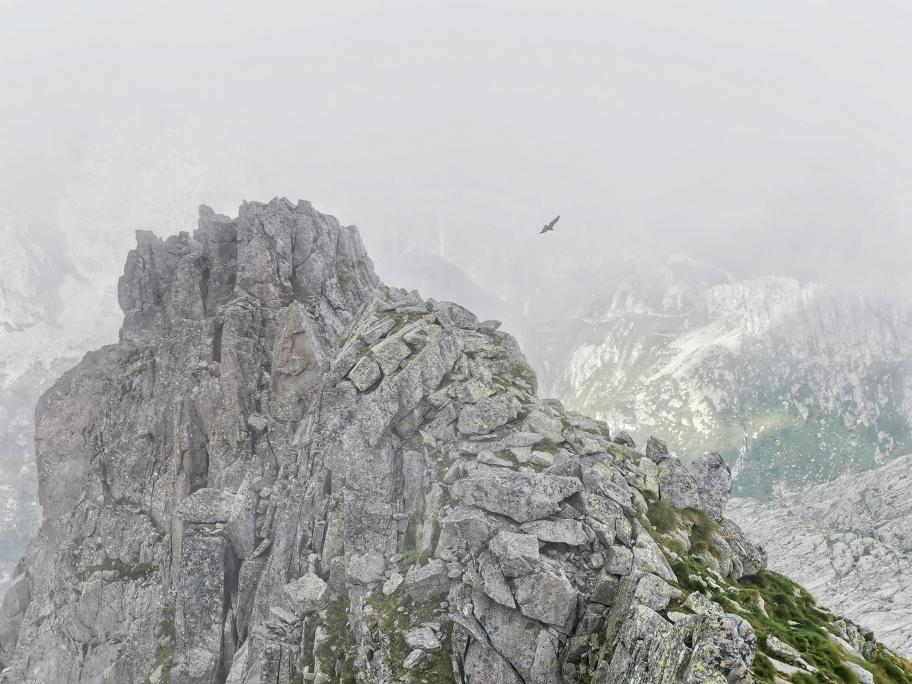 ... und ein kreisender Adler am Rifugio Maria é Franco
