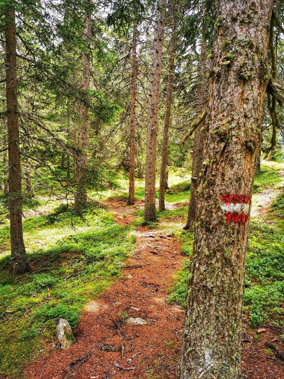 Deutlich bessere Wegverhältnisse beim Abstieg nach Ochsengarten