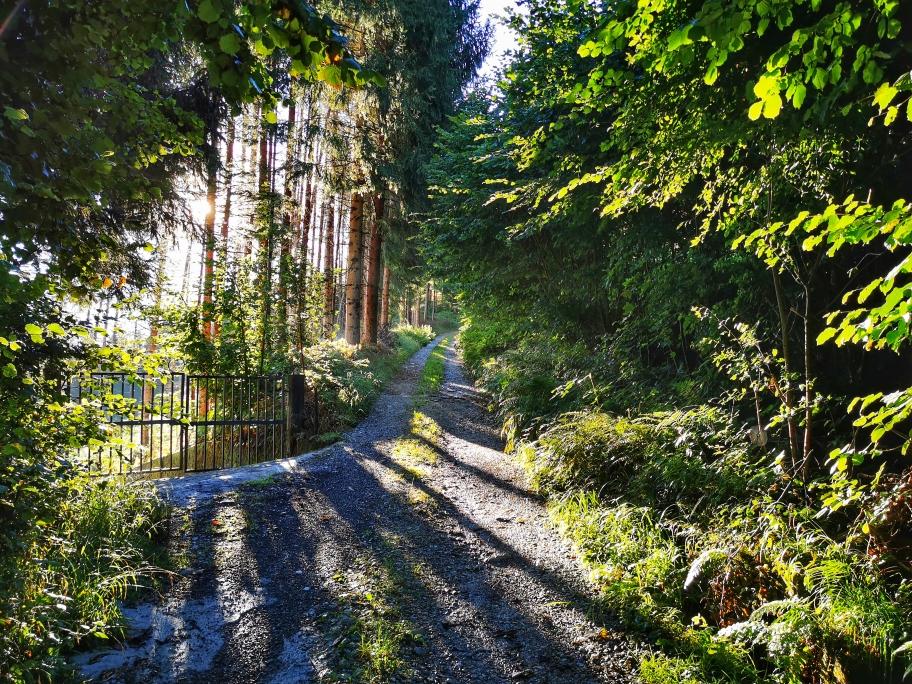 ... bevor es über eine Fahrstraße im Wald hinauf geht