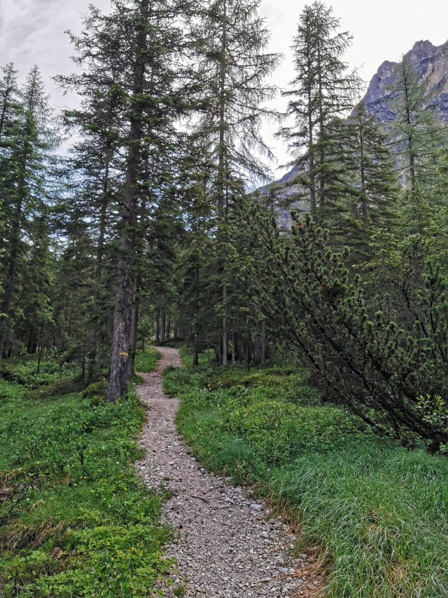 Wir schlagen den Weg links in den Wald ein