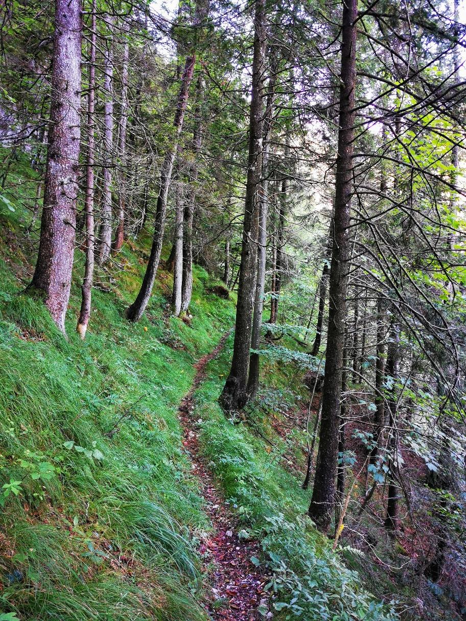 Zunächst im lichteren Wald...