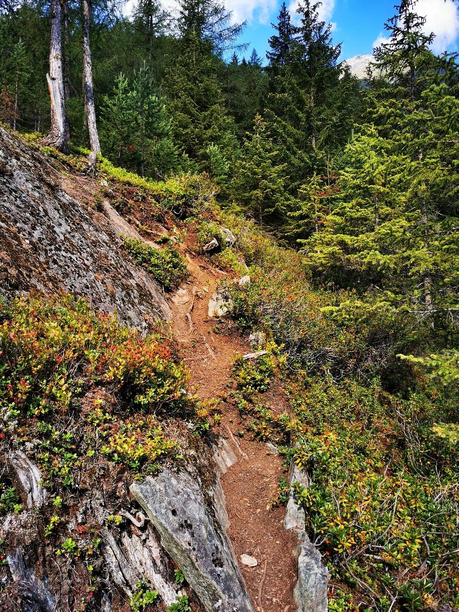 Der Steig im Wald ist der kürzeste Weg zur Alm