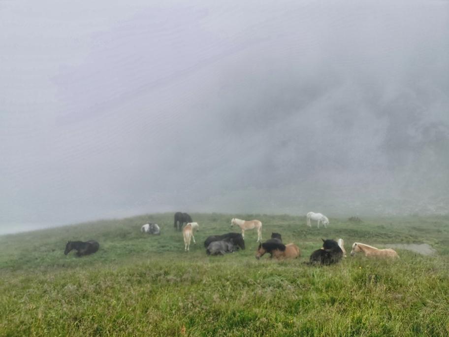 Pferde am Fuße des Widdersteins