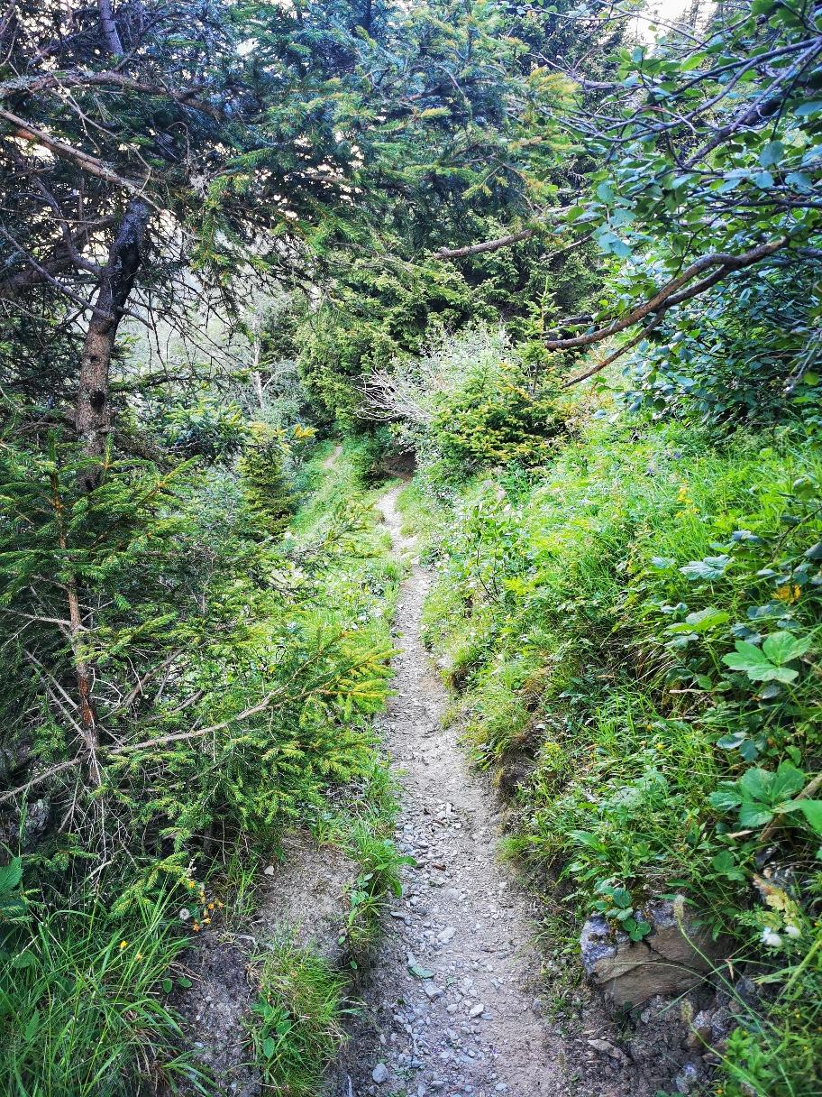 Durch den Wald steige ich die letzten 300 Höhenmeter ins Pitztal ab