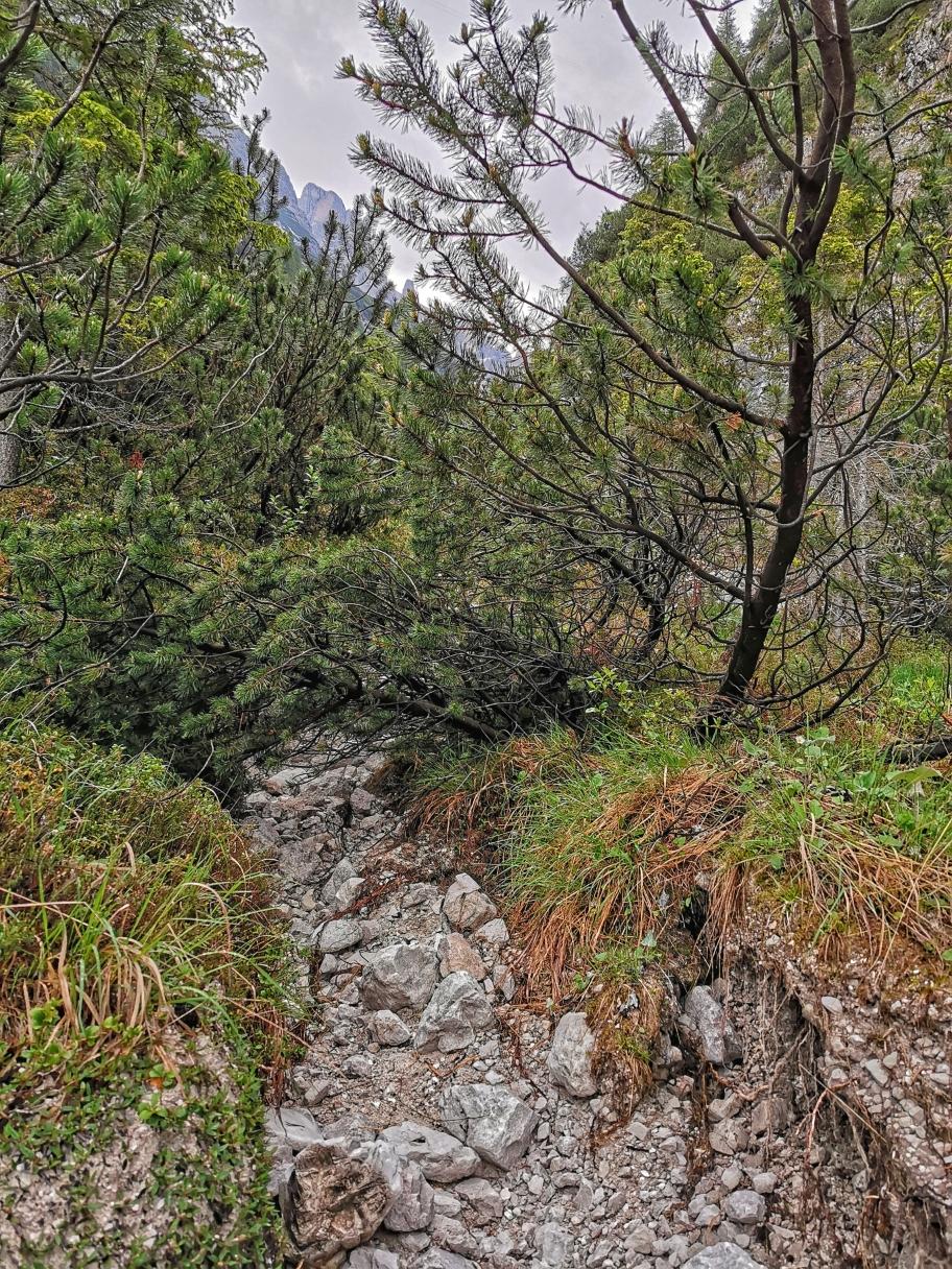 Immer wieder versperren Bäume oder Steine den Weg