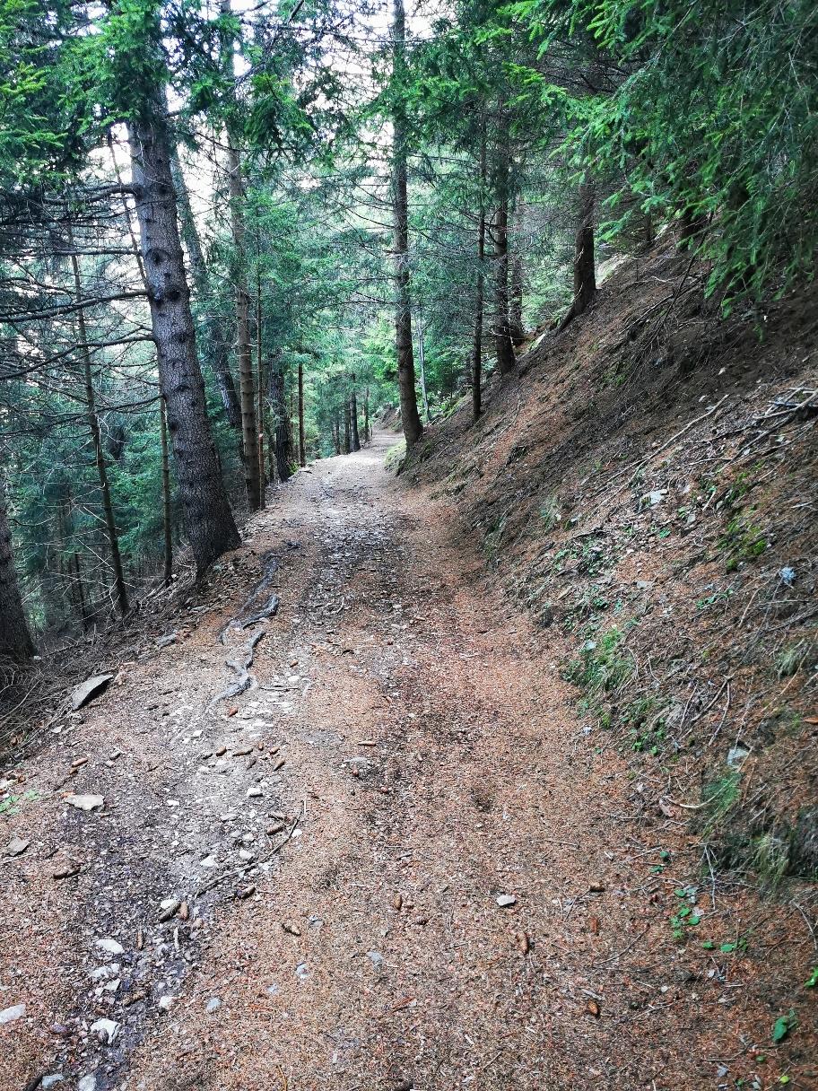 Durch den Wald gehts hinunter nach Ponte di Legno