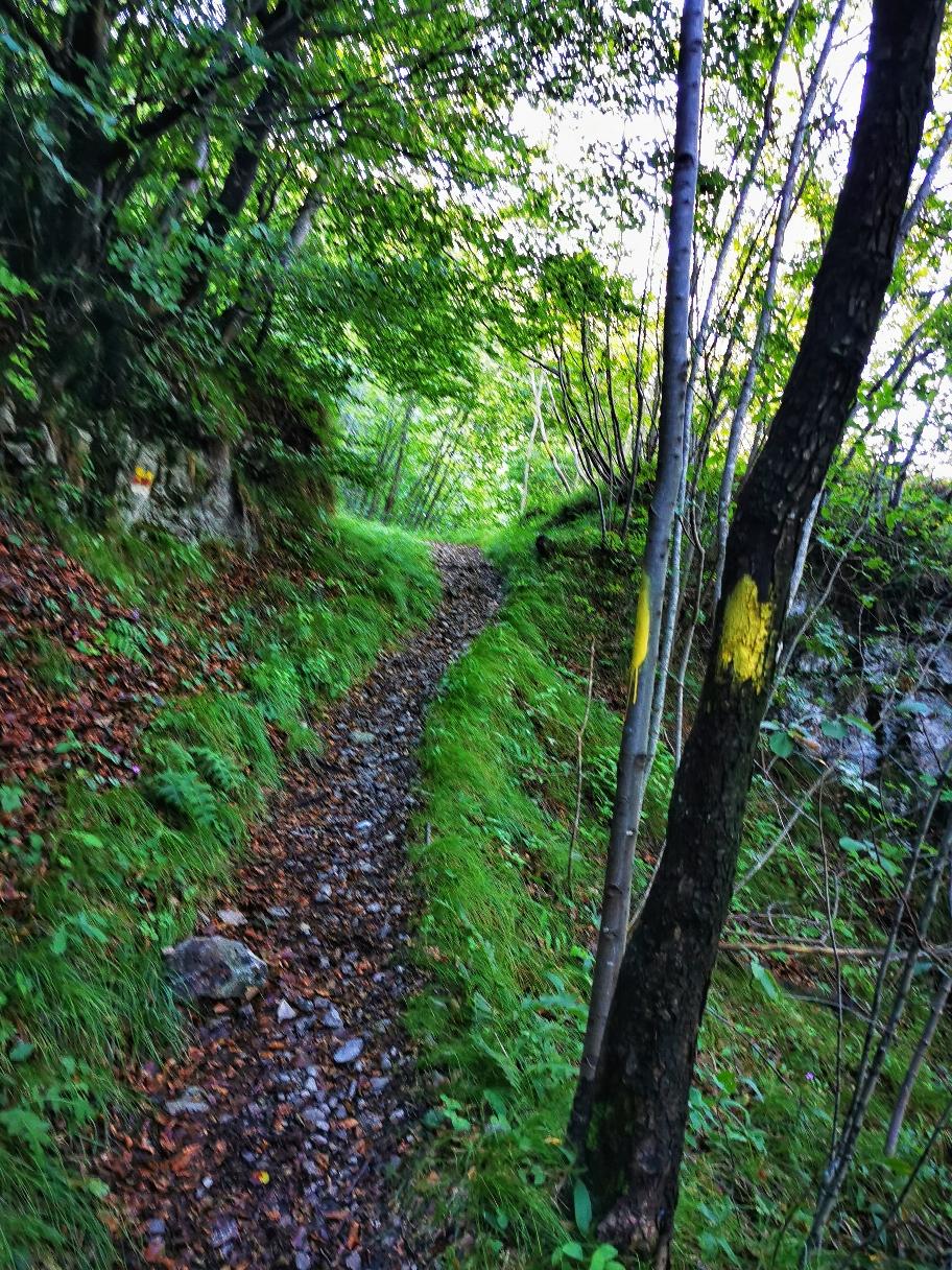 ... bevor es auf markierten Waldwegen Richtung Monte Censo geht