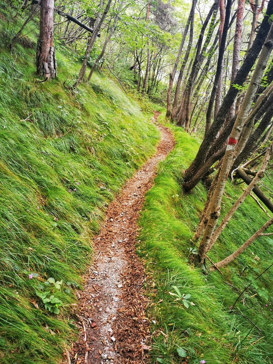 Auf schmalem Waldpfad geht's hinauf...