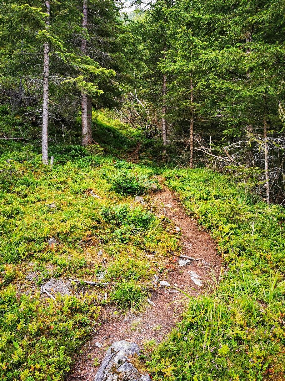 Im Wald geht's hoch zur Breitlehnalm