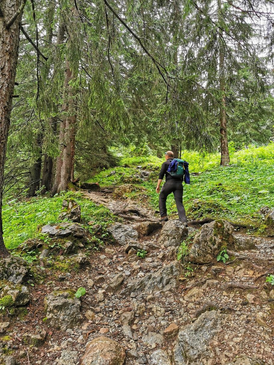 Durch den Wald geht's weiter hinauf