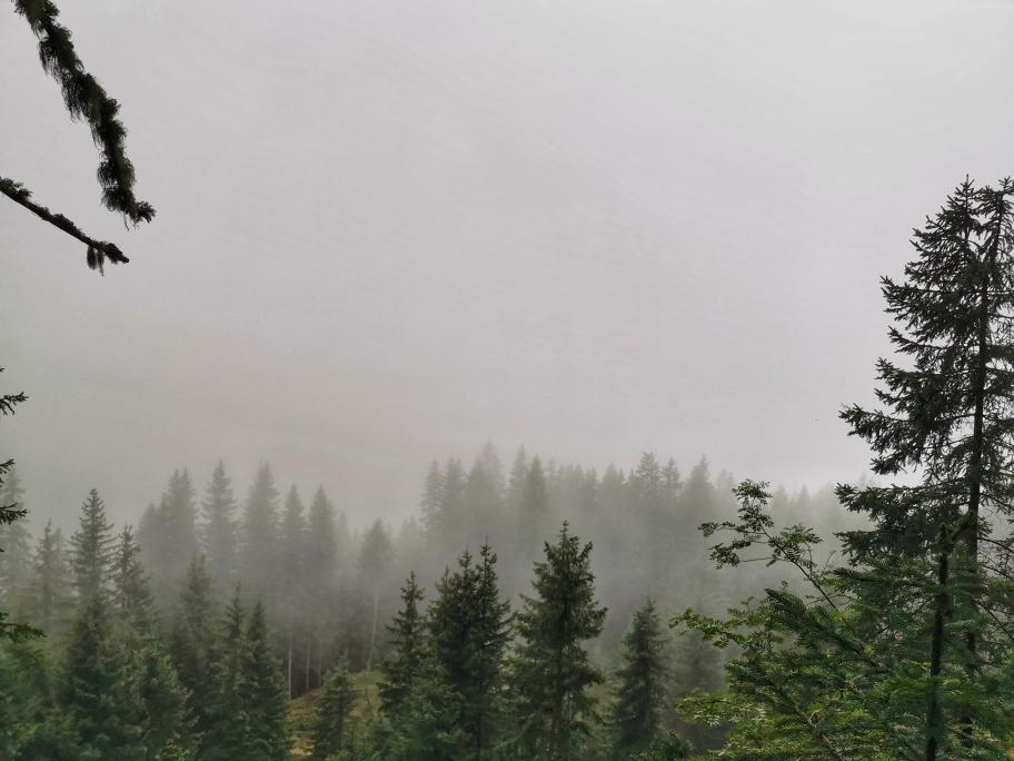 Dicke Wolken hängen zwischen den Bäumen