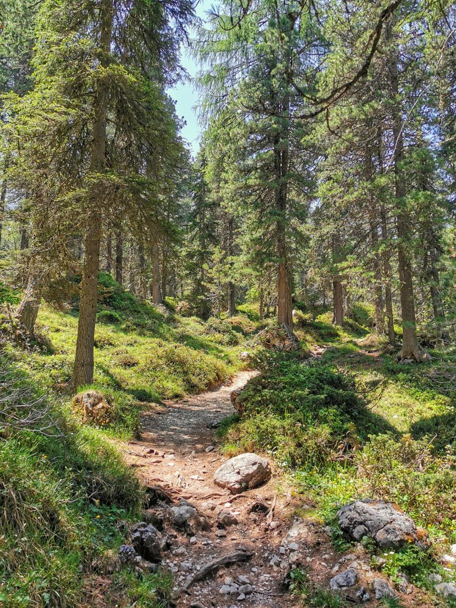 Wunderbarer Weg durch den Wald