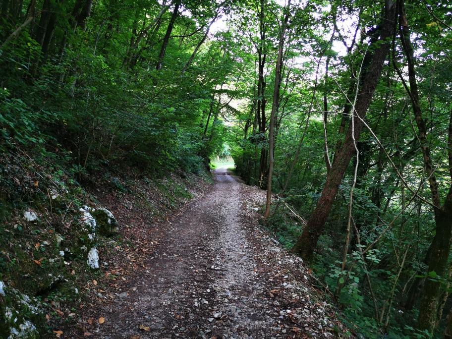 ... führt mich bald auf eine breitere Fahrstraße Richtung Tal