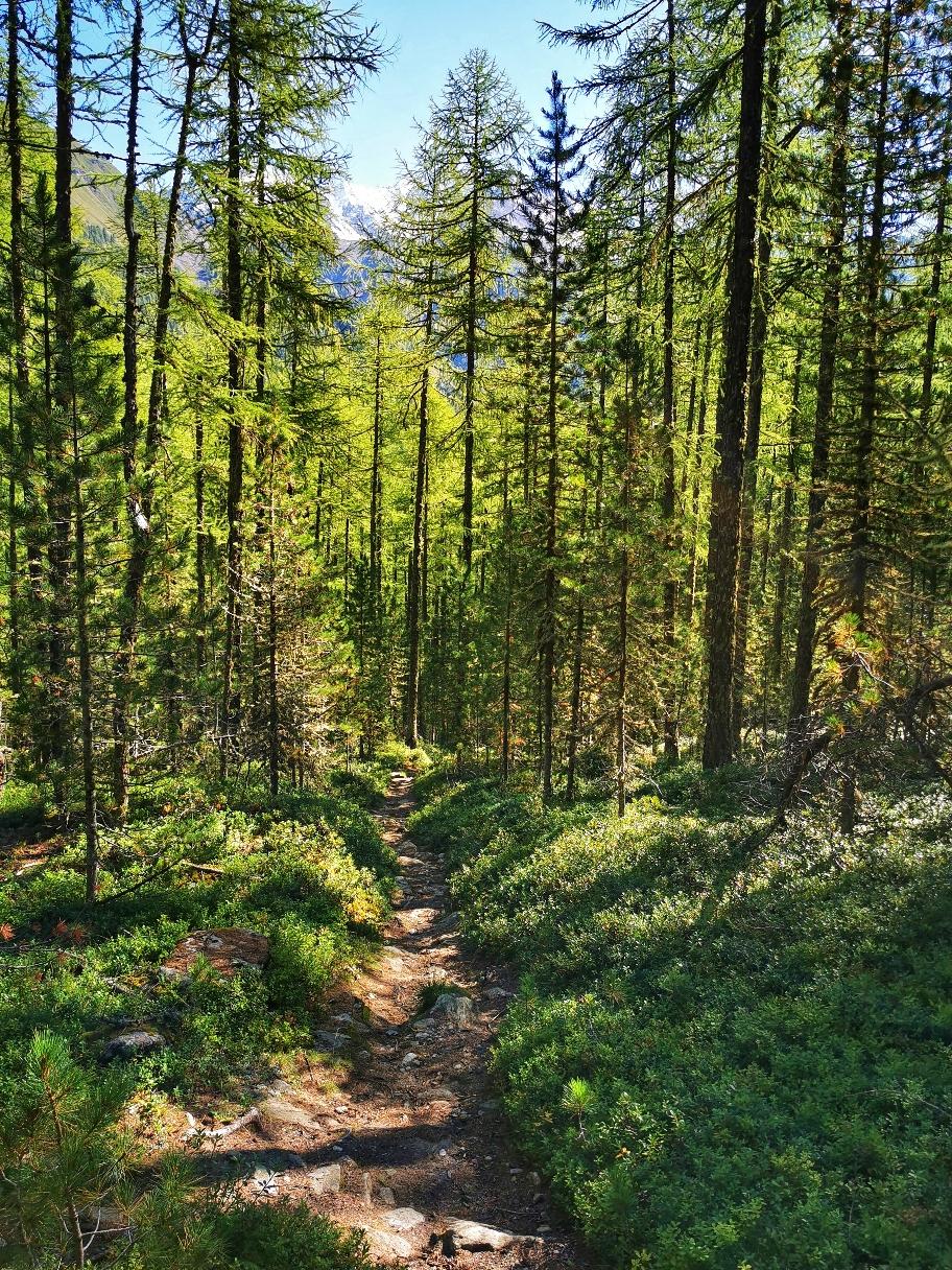 Waldweg hinunter nach Vernagt