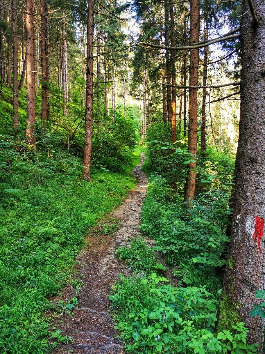 Durch den Wald gehts weiter hinauf