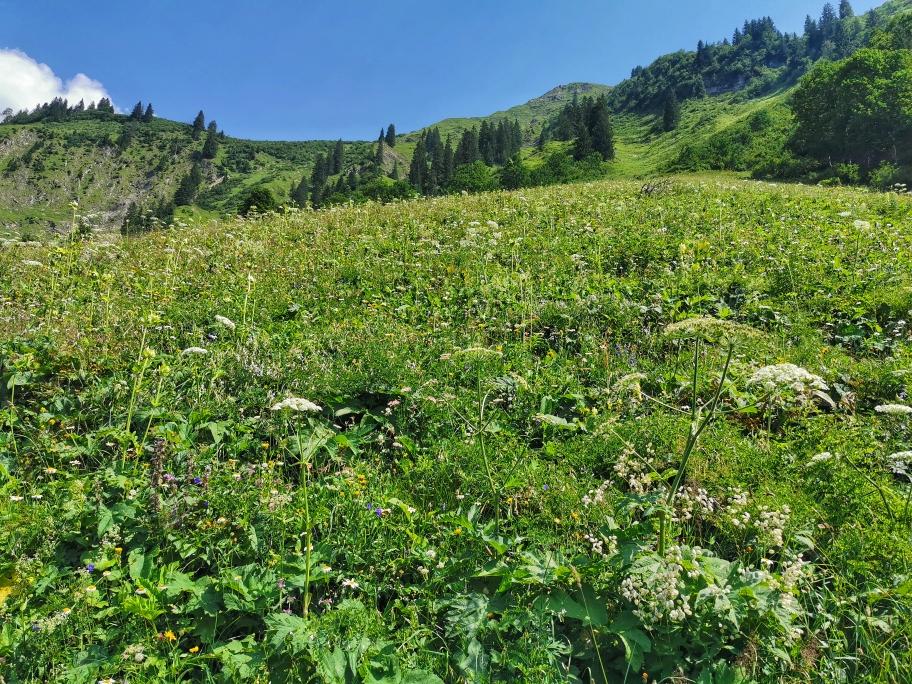 Blühende Wiesen unterhalb der Enzianhütte