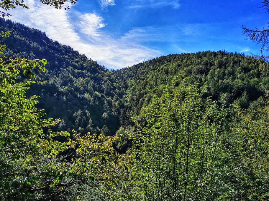 Zunächst gibt der Wald nur einen seitlichen Ausblick frei...