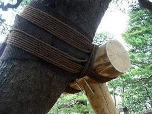 兼六園のロープ