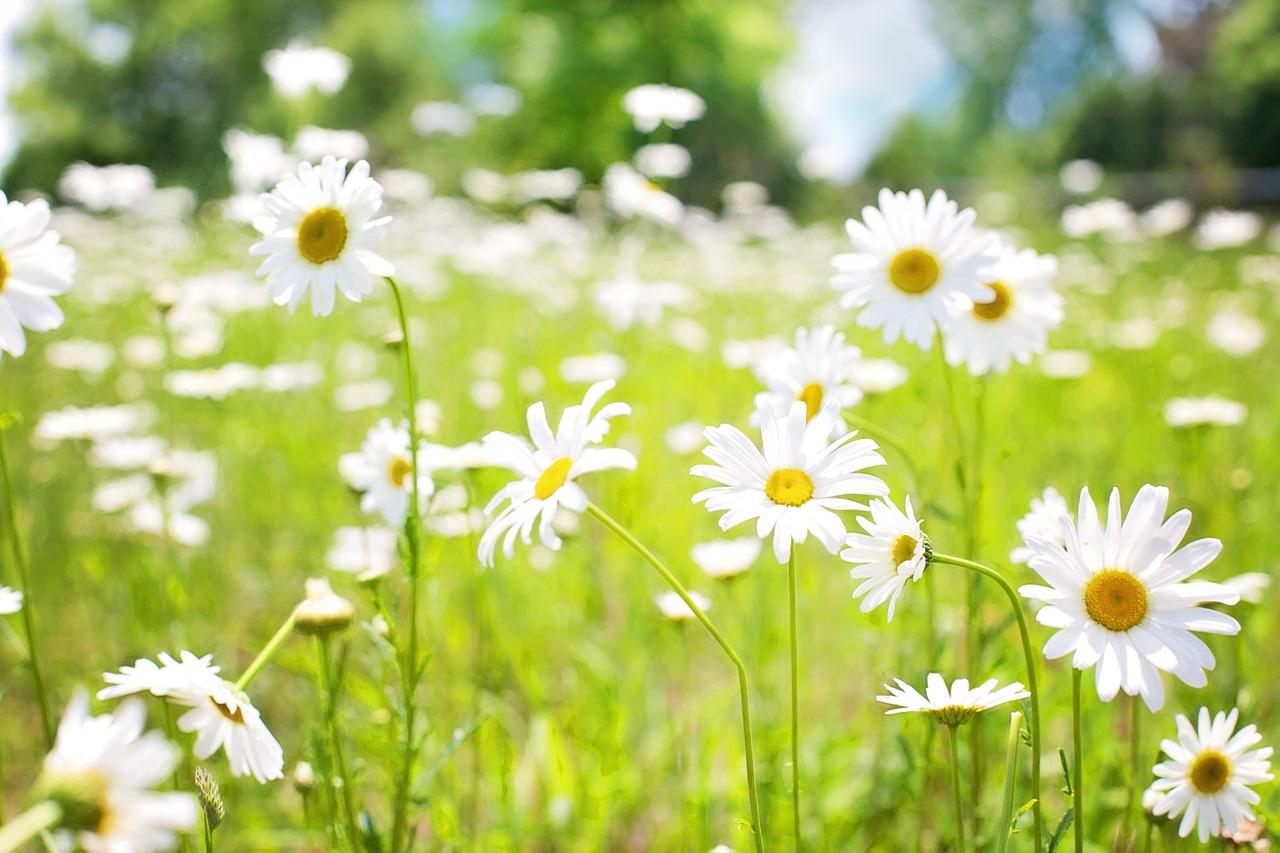 GRANDIR Z'AISNE : Fleurs de BACH - Site de grandirzaisne